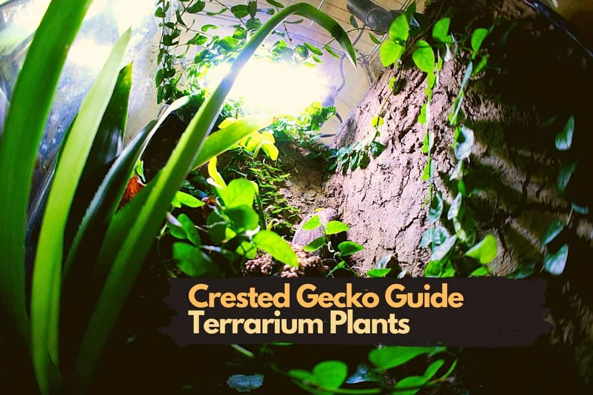 Everything You Need To Know About Terrarium Plants For Crested Geckos