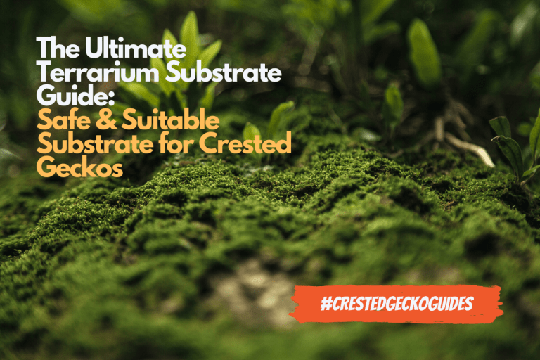 Substrates for Crested Geckos: Picking the Best Substrate