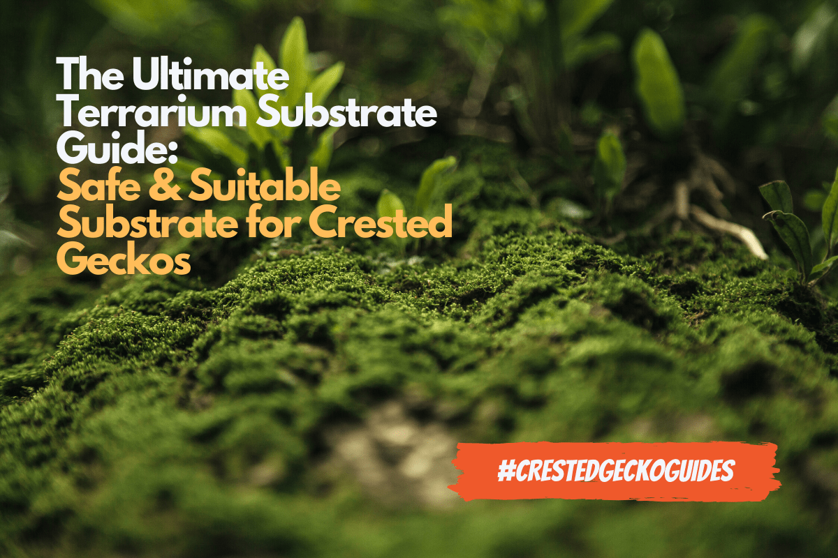 Substrates For Crested Geckos Picking The Best Substrate