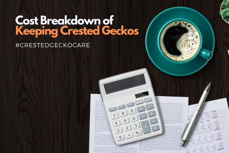 Cost Breakdown of Keeping Crested Geckos: What Do They Cost?