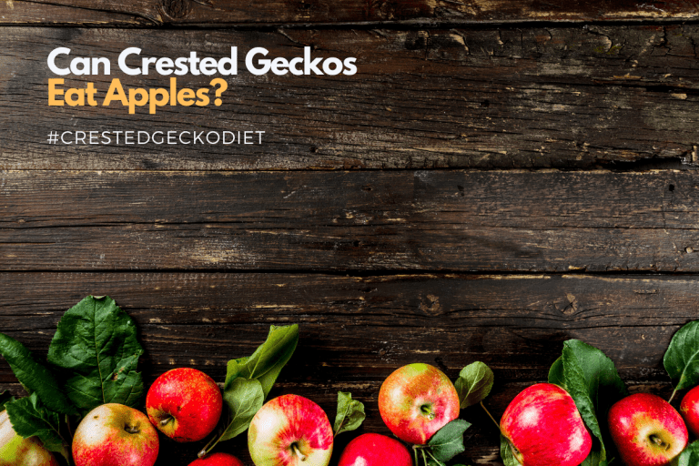Can Crested Geckos Eat Apples and How to Feed Them?