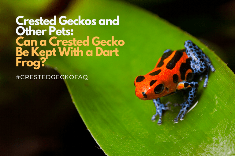 Can Crested Geckos Live With Poison Dart Frogs?