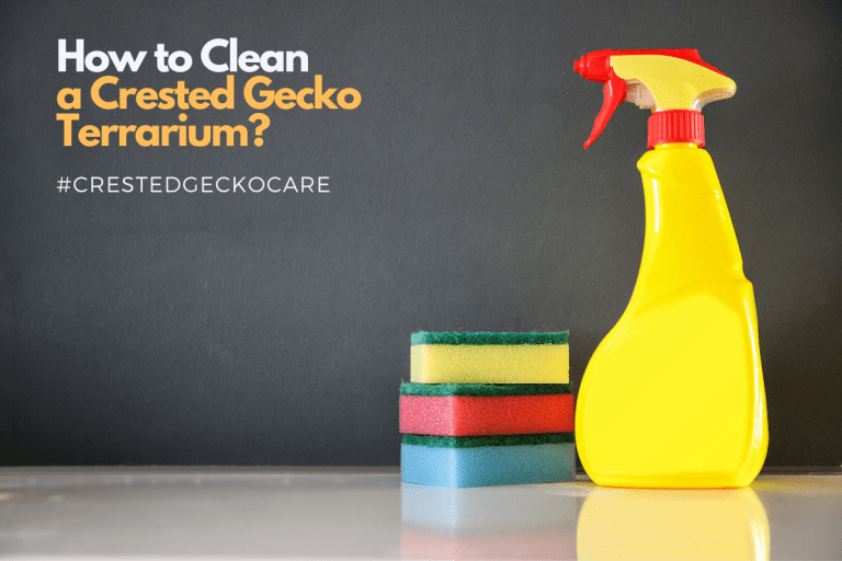 Cleaning the Crested Gecko Terrarium: Instructional Guide