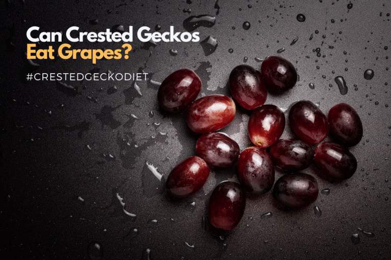 Can Crested Geckos Eat Grapes and How to Feed Them?