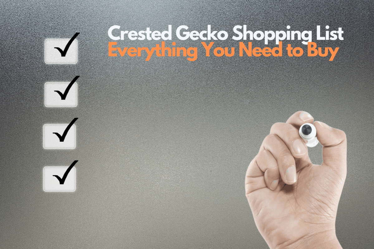 crested gecko shopping list