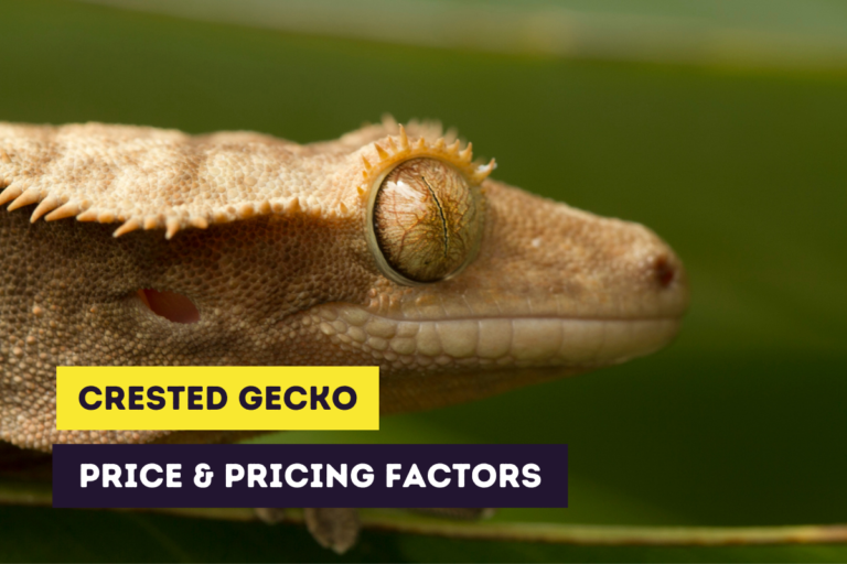 Crested Gecko Price and Factors That Influence The Price