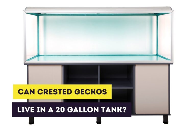 Can a Crested Gecko Live in a 20-Gallon Long Tank?